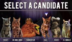 Cat President: A More Purrfect Union thumbnail